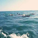 whale sharks cancun mexico 15 150x150 WHALE SHARKS Cancun Mexico
