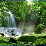 amazon rainforest adventures travel brazil 12 150x150 Amazon Rainforest Adventures   Travel Brazil