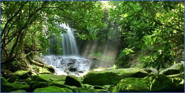 amazon rainforest adventures travel brazil 12 Amazon Rainforest Adventures   Travel Brazil