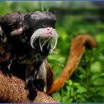 amazon rainforest adventures travel brazil 16 150x150 Amazon Rainforest Adventures   Travel Brazil