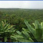 amazon rainforest adventures travel brazil 19 150x150 Amazon Rainforest Adventures   Travel Brazil