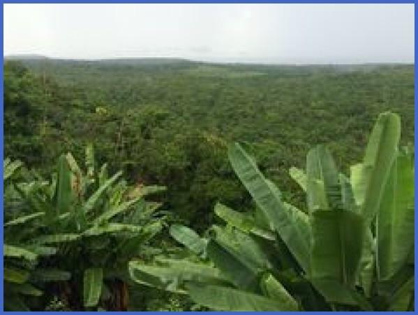 amazon rainforest adventures travel brazil 19 Amazon Rainforest Adventures   Travel Brazil