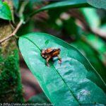 amazon rainforest adventures travel brazil 2 150x150 Amazon Rainforest Adventures   Travel Brazil