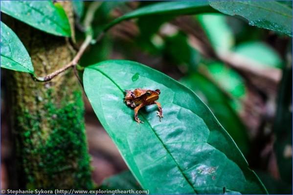 amazon rainforest adventures travel brazil 2 Amazon Rainforest Adventures   Travel Brazil