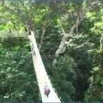 amazon rainforest adventures travel brazil 9 150x150 Amazon Rainforest Adventures   Travel Brazil