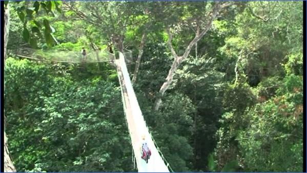 amazon rainforest adventures travel brazil 9 Amazon Rainforest Adventures   Travel Brazil