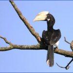 bird reading in dandeli karnataka 11 150x150 Bird Reading in Dandeli   Karnataka