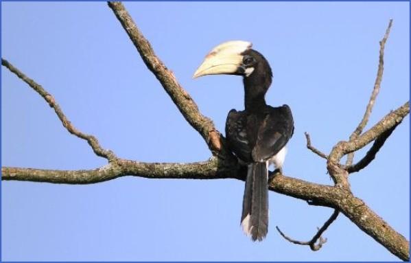 bird reading in dandeli karnataka 11 Bird Reading in Dandeli   Karnataka