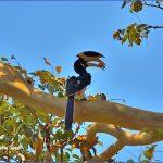 bird reading in dandeli karnataka 12 150x150 Bird Reading in Dandeli   Karnataka