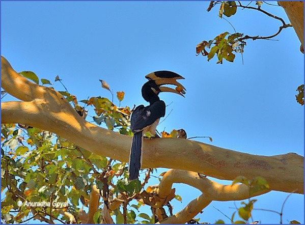 bird reading in dandeli karnataka 12 Bird Reading in Dandeli   Karnataka