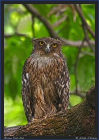 bird reading in dandeli karnataka 13 Bird Reading in Dandeli   Karnataka