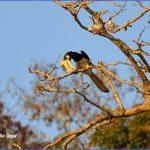 bird reading in dandeli karnataka 15 1 150x150 Bird Reading in Dandeli   Karnataka