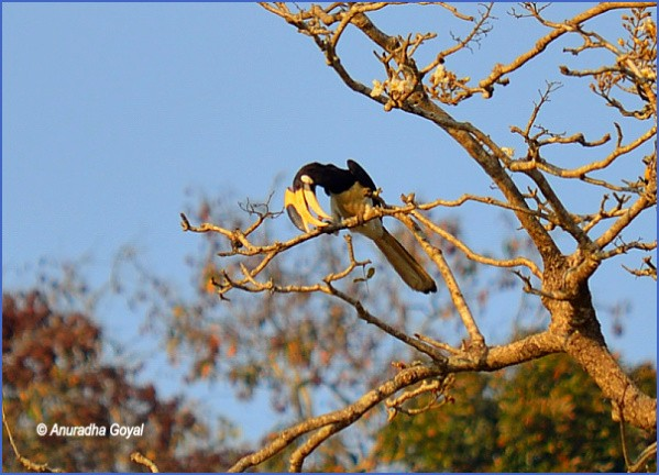 bird reading in dandeli karnataka 15 1 Bird Reading in Dandeli   Karnataka