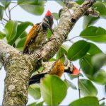 bird reading in dandeli karnataka 7 150x150 Bird Reading in Dandeli   Karnataka