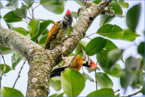 bird reading in dandeli karnataka 7 Bird Reading in Dandeli   Karnataka