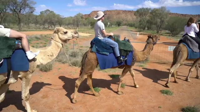 camel riding in the australian outback 16 Camel Riding in the Australian Outback