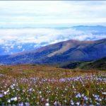 chikmagalur mullayanagiri peak 10 150x150 Chikmagalur   Mullayanagiri Peak