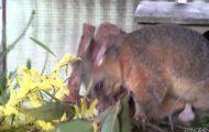 cutest australian animals ever 43