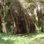 cutest teepee camping spot 23 150x150 CUTEST TEEPEE CAMPING SPOT