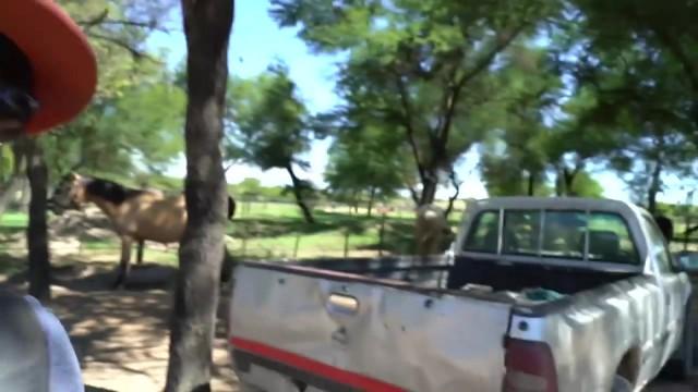 dangerously close to elephants 09 Dangerously Close to Elephants