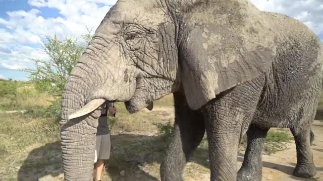dangerously close to elephants 35 Dangerously Close to Elephants