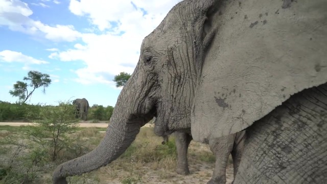 dangerously close to elephants 37 Dangerously Close to Elephants