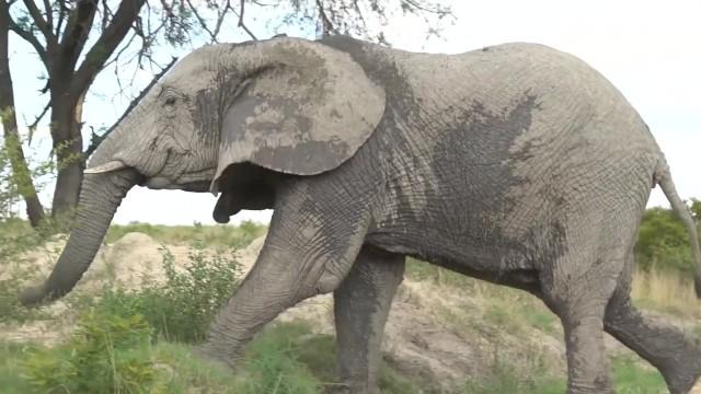 dangerously close to elephants 40 Dangerously Close to Elephants
