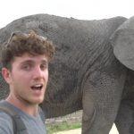 dangerously close to elephants 42 150x150 Dangerously Close to Elephants