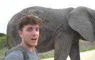 dangerously close to elephants 42