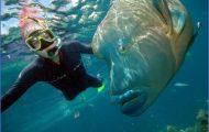 Diving the Great Barrier Reef - Travel Australia _1.jpg