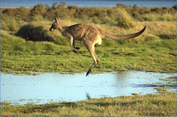 eating kangaroo with aboriginals travel australia  0 Eating Kangaroo with Aboriginals   Travel Australia