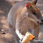 eating kangaroo with aboriginals travel australia  10 150x150 Eating Kangaroo with Aboriginals   Travel Australia