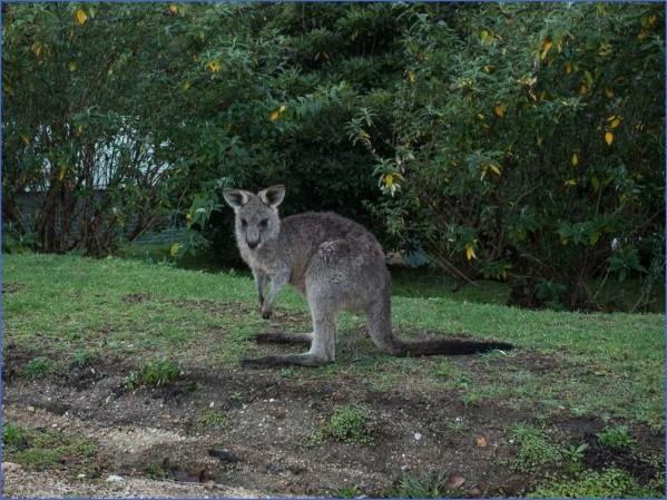eating kangaroo with aboriginals travel australia  11 Eating Kangaroo with Aboriginals   Travel Australia