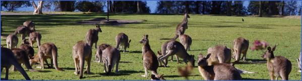 eating kangaroo with aboriginals travel australia  2 Eating Kangaroo with Aboriginals   Travel Australia