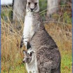 eating kangaroo with aboriginals travel australia  3 150x150 Eating Kangaroo with Aboriginals   Travel Australia
