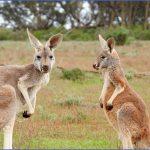 eating kangaroo with aboriginals travel australia  4 150x150 Eating Kangaroo with Aboriginals   Travel Australia