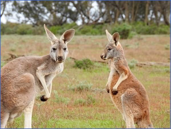 eating kangaroo with aboriginals travel australia  4 Eating Kangaroo with Aboriginals   Travel Australia