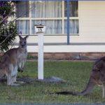 eating kangaroo with aboriginals travel australia  6 150x150 Eating Kangaroo with Aboriginals   Travel Australia