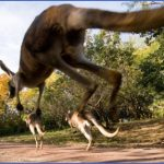 eating kangaroo with aboriginals travel australia  7 150x150 Eating Kangaroo with Aboriginals   Travel Australia