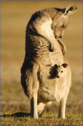 eating kangaroo with aboriginals travel australia  8 Eating Kangaroo with Aboriginals   Travel Australia