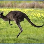 eating kangaroo with aboriginals travel australia  9 150x150 Eating Kangaroo with Aboriginals   Travel Australia