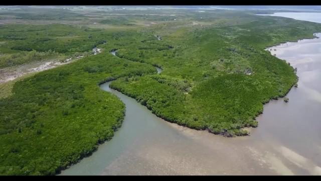 epic treehouse retreat in port douglas 57 Epic Treehouse Retreat in Port Douglas