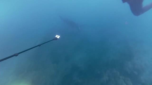 snorkling with manta rays yasawa islands fiji 27 SNORKLING WITH MANTA RAYS Yasawa Islands Fiji