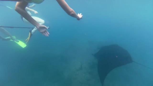 snorkling with manta rays yasawa islands fiji 28 SNORKLING WITH MANTA RAYS Yasawa Islands Fiji