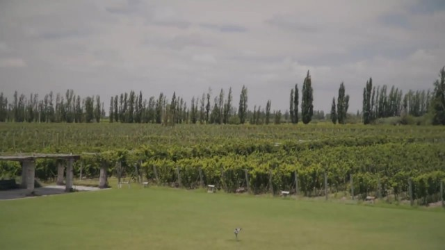 too much argentine wine 21 TOO MUCH ARGENTINE WINE