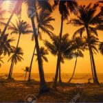 tropical paradise sunset 1 150x150 TROPICAL PARADISE SUNSET