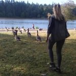 when canadian geese attack 28 150x150 WHEN CANADIAN GEESE ATTACK