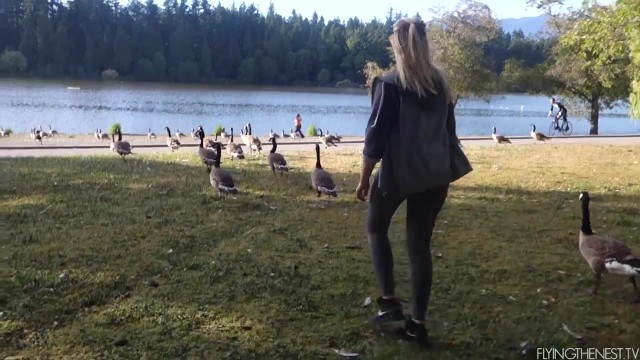 when canadian geese attack 28 WHEN CANADIAN GEESE ATTACK