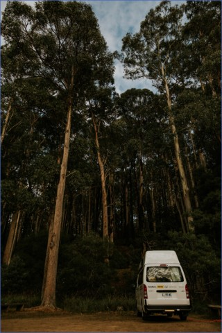 wild tasmania travel australia  10 Wild Tasmania   Travel Australia