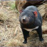 wild tasmania travel australia  11 150x150 Wild Tasmania   Travel Australia